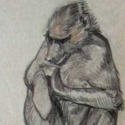 Babouin cherchant ses puces. 1930.